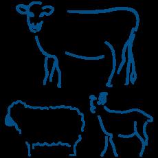 Animales de producción